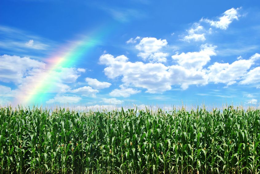 Farming2.jpg